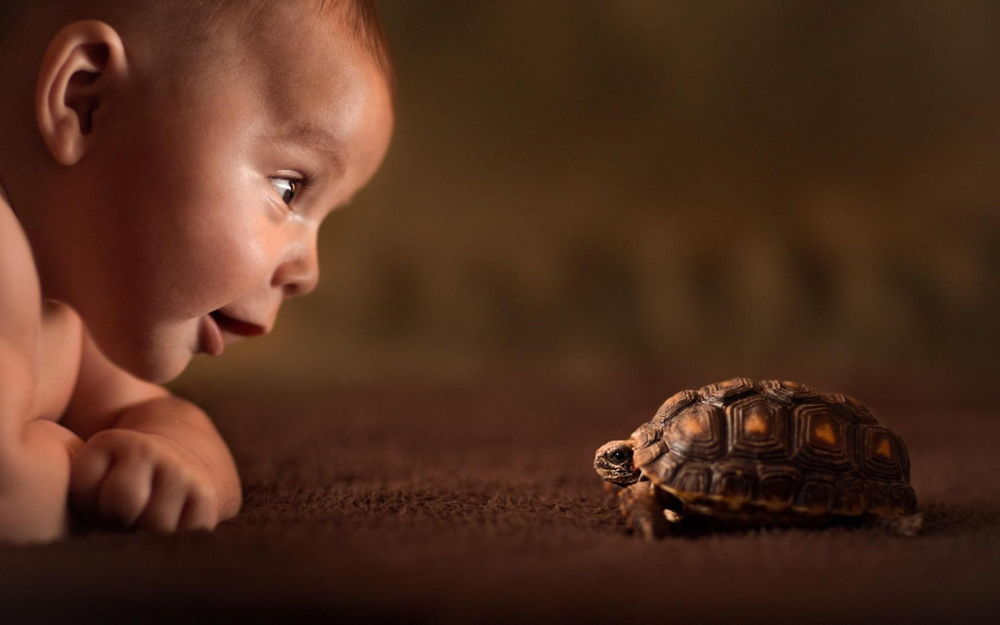 baby-turtle-curiosity-wallpaper-53cabc35d86bf